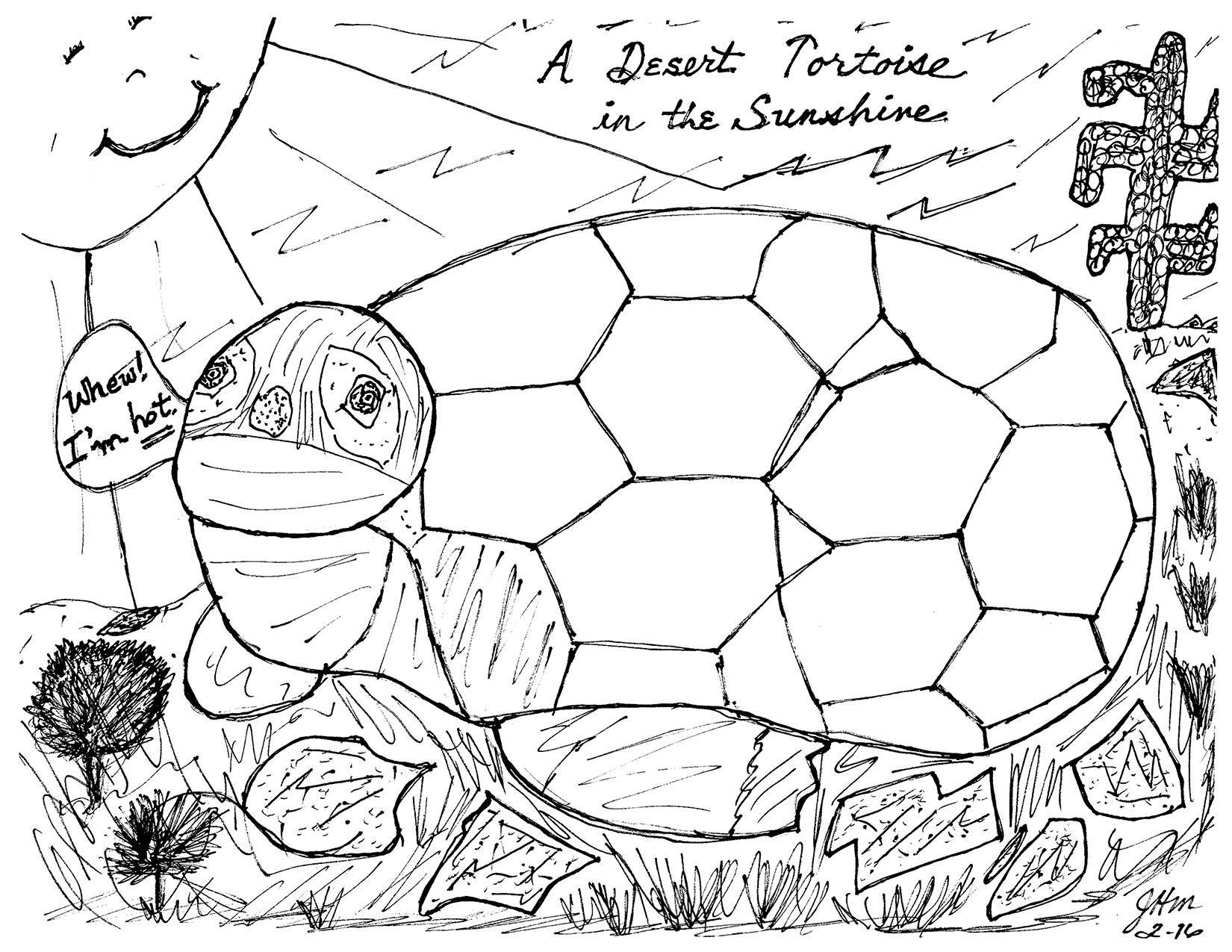 A Desert Tortoise